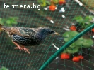 Мрежа за защита от птици Пловдив