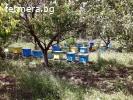Продавам пчелин ДБ 10 рамкови с оборудване и място